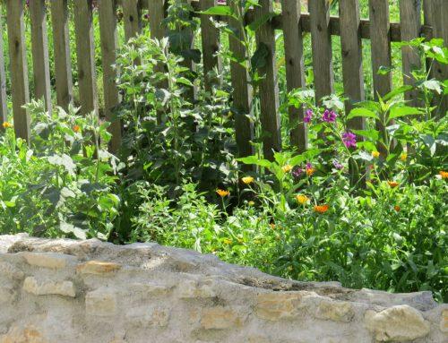 Kräuter und Obst am Arlitscherhof